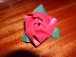 cube rose