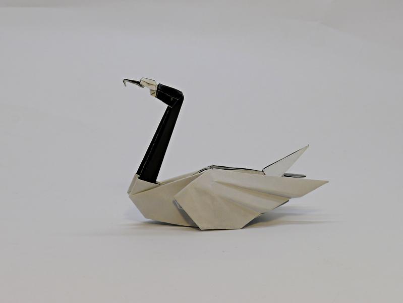 Manuel Sirgo labuť černokrká