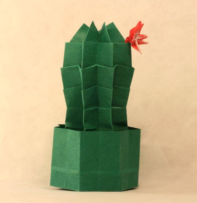 Mrajca_Kaktus