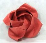 Rozvitá růže