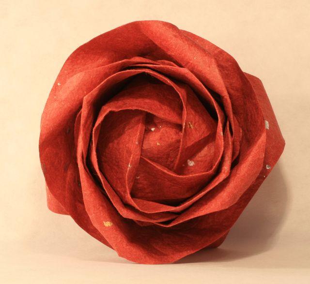Nová růže