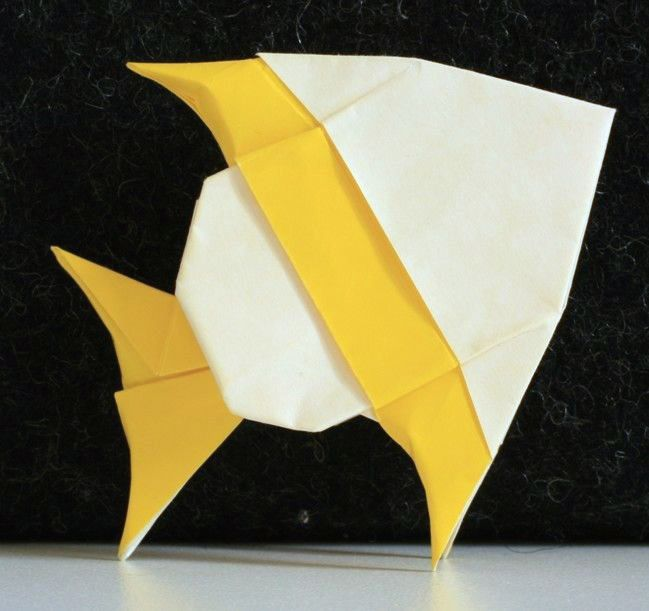 Lang: ryba rodu Pomacantus