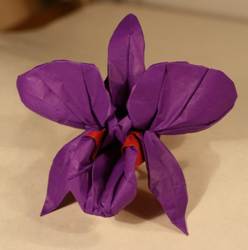 M.G. LaFosse: fialová Cattleya