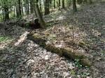 cesta přes bludné kořeny