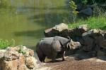 nosoržec indický