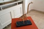 Fumiaki Kawahata: brachiosaurus, interpretace: Radek Herink