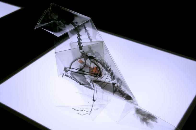 Takayuki Hori, vrabec