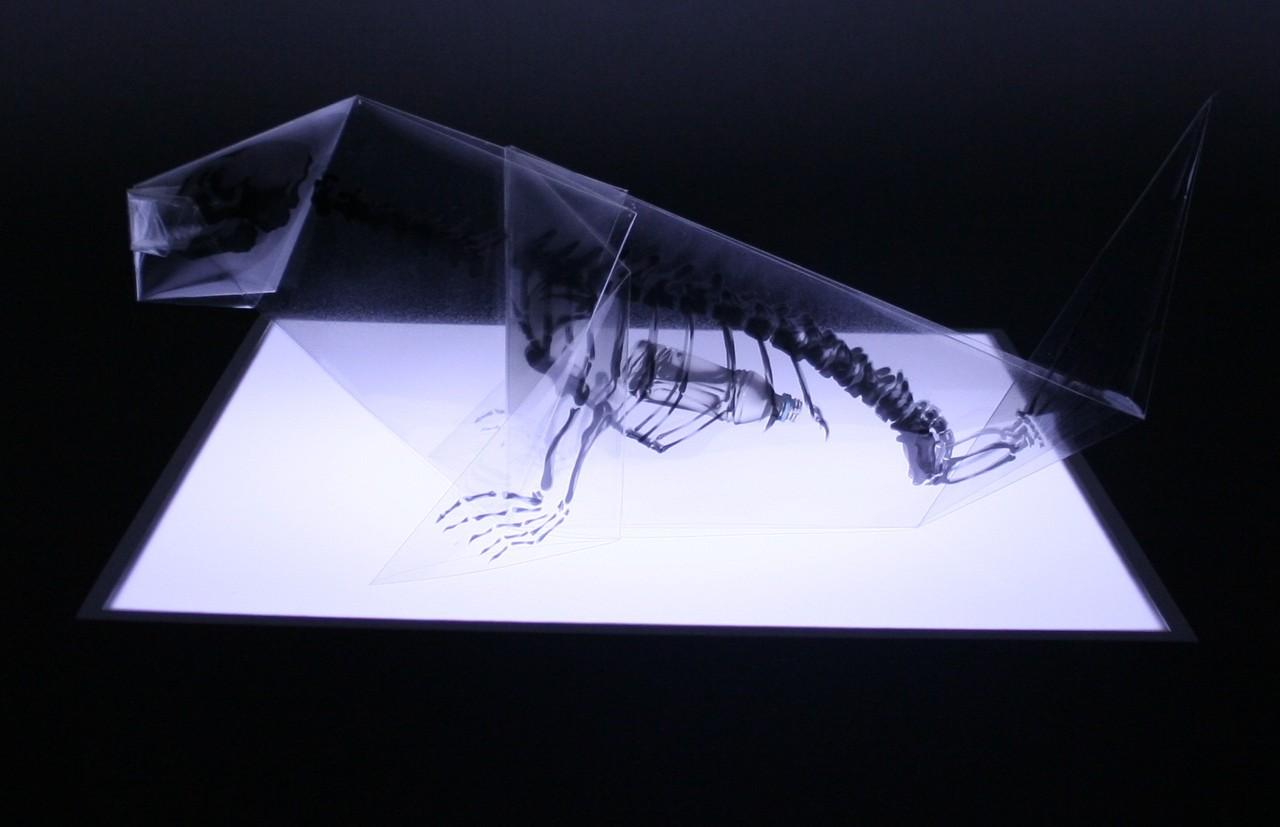 Takayuki Hori, holub s PET lahví