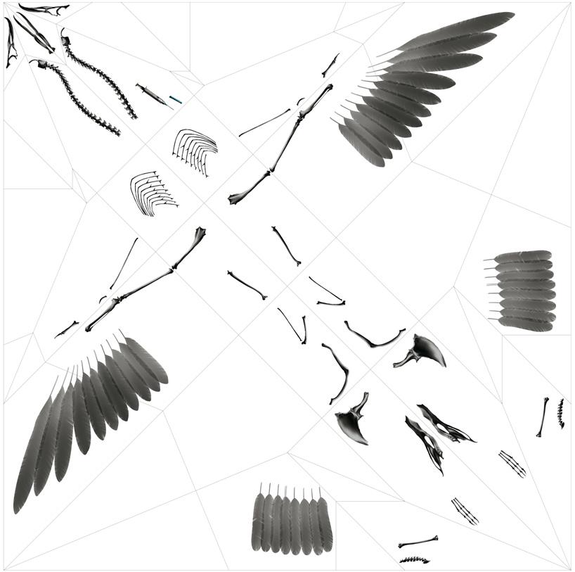 Takayuki Hori, ukázka předtištěného archu transparentní fólie