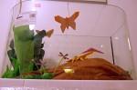 Masožravkárium: motýl