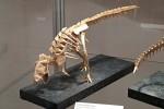 Yoshino Issei: kostra tyranosaura