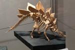 Bill Bankwitz: kostra stegosaura