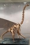 Fumiaki Kawahata: kostra brachiosaura