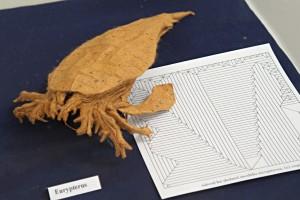 Petr Stuchlý: eurypterus