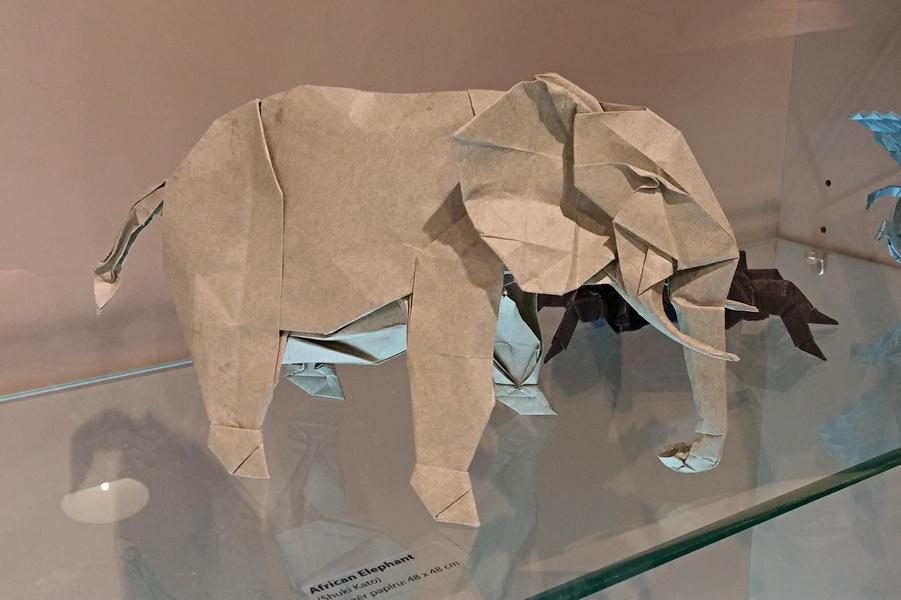 Šuki Kato - slon africký